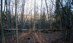 24.71 Acre Wooded Parcel in Goshen